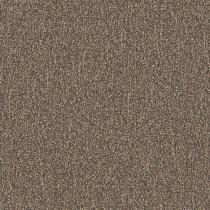 Shaw Homeroom V 3.0 Modular Tile Final Exam